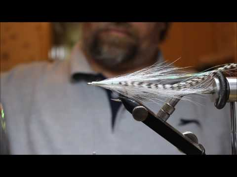 New Video Flatwing fly